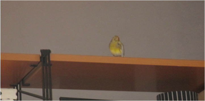 A bird on the wall unit, an unexpected visitor theboondocksblog