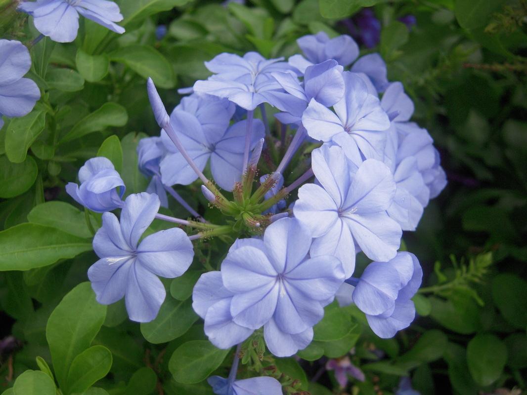 Blue flower, A new addition to the blog, www.theboondocksblog.com