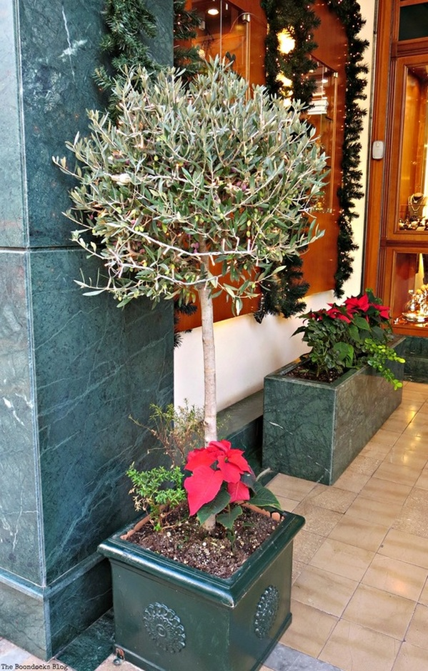 Olive tree, Christmas in the heart of the city - the boondocks blog