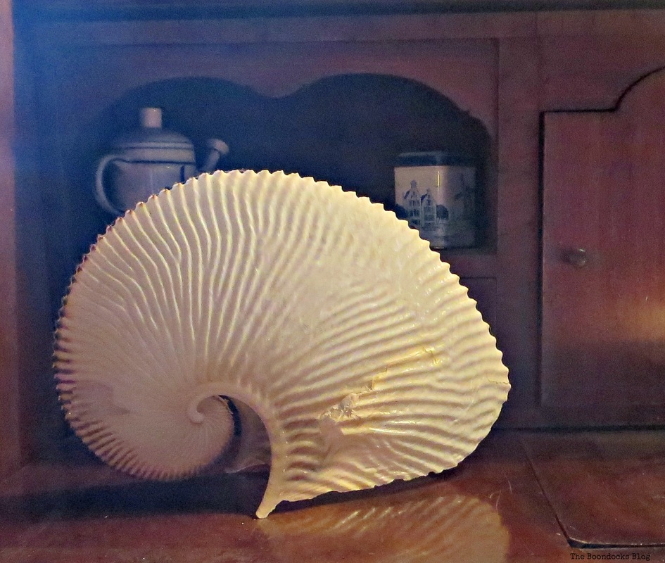 A fanlike shell resting on the desk - A house full of tresures - the boondocks blog