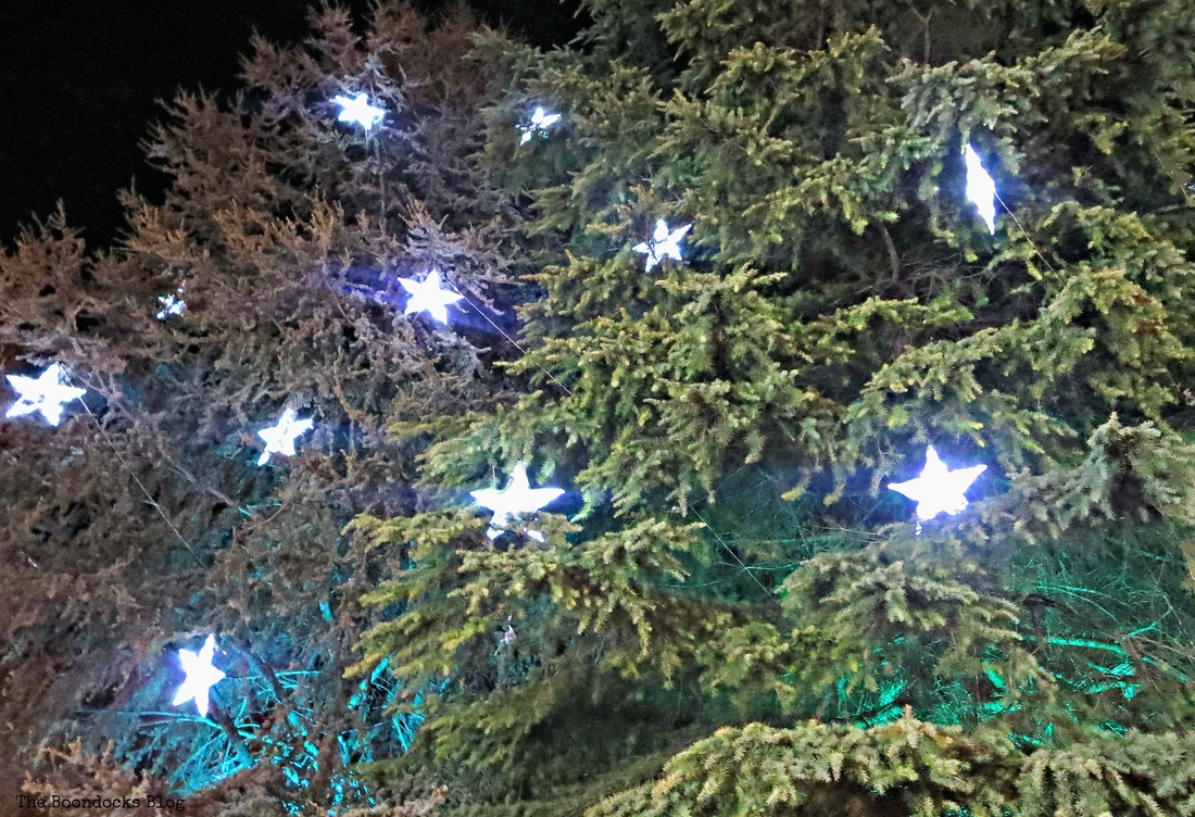 Stars on trees, Christmas Park - The Boondocks Blog
