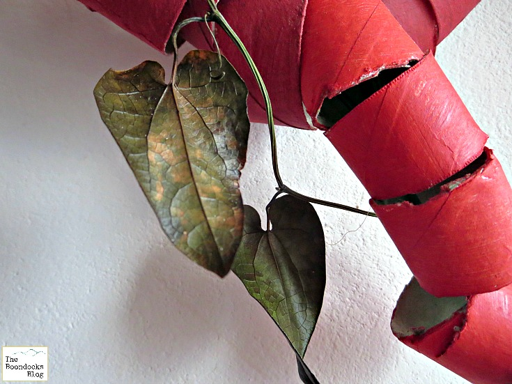 Green ivy leaf, A big, bold heart - The Boondocks blog