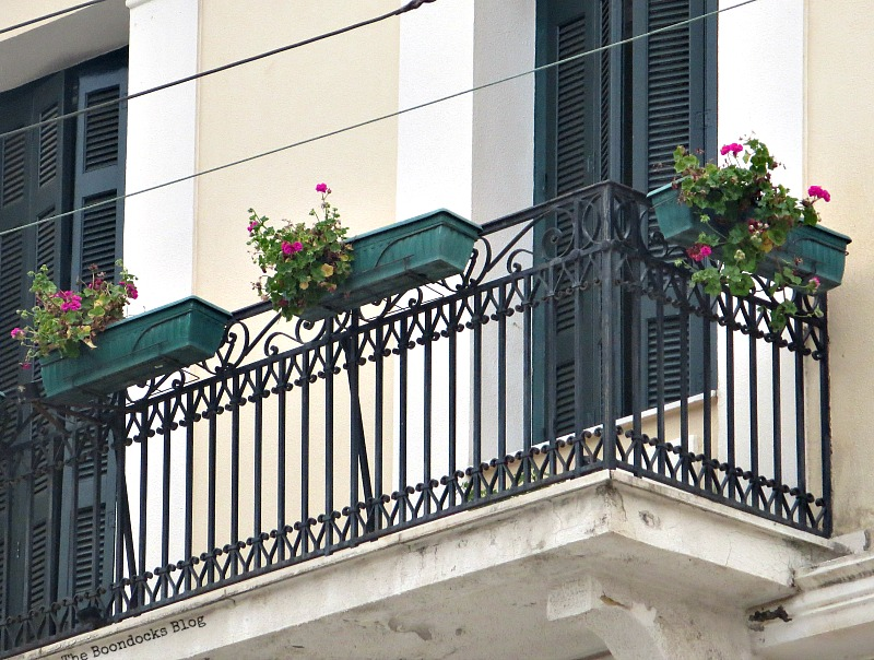Flowers on balcony Flowers for Spring in Greece Int'l bloggers club challenge www.theboondocksblog.com