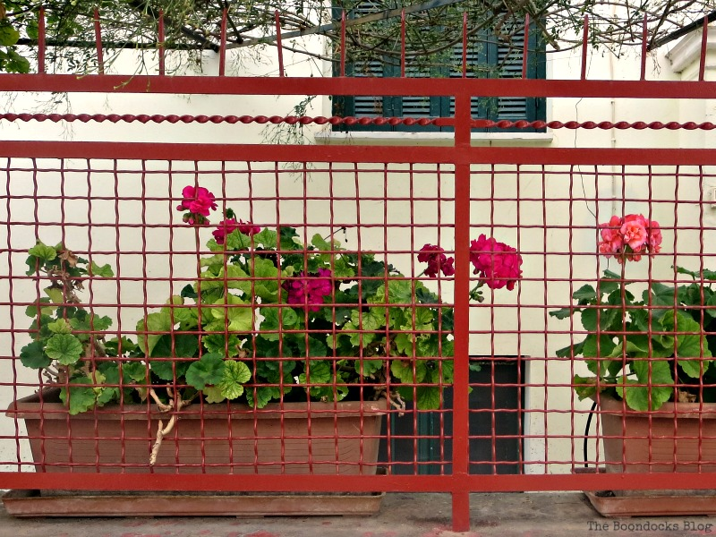Planters on fence Flowers for Spring in Greece It'l Bloggers Club Challenge www.theboondocksblog.com