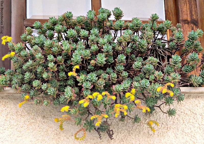 planters on ledge Flowers for Spring in Greece Int'l Bloggers Club Challenge www.theboondocksblog.com