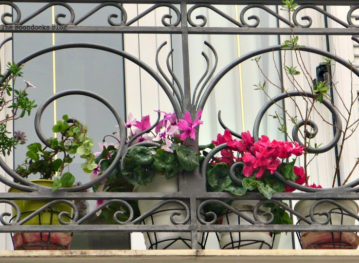 flowers on balcony - Flowers of Spring in Greece Int'l Bloggers Club Challenge www.theboondocksblog.com