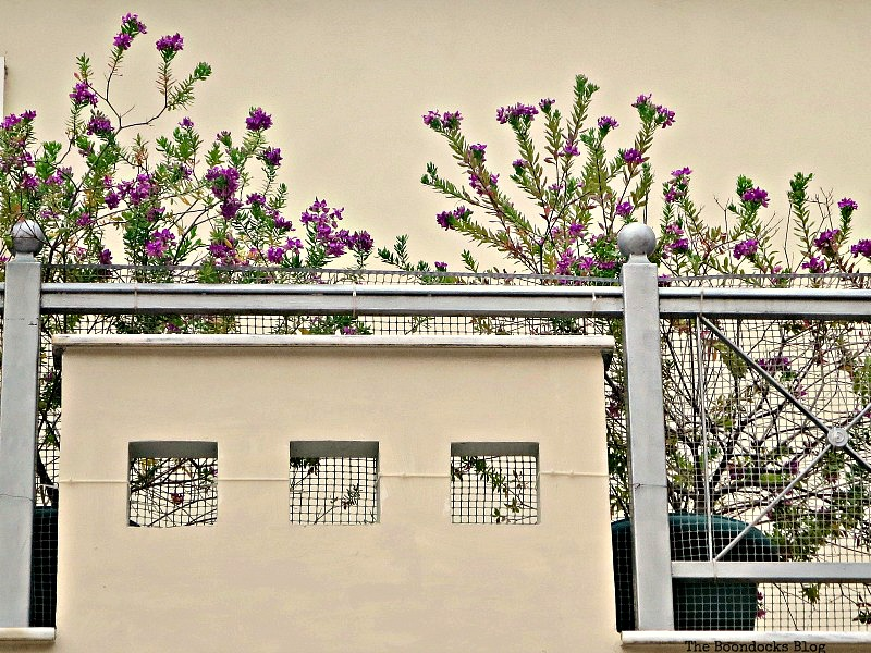 Flowers on balcony, Flowers for Spring in Greece Int'l Bloggers Club Challenge www.theboondocksblog.com