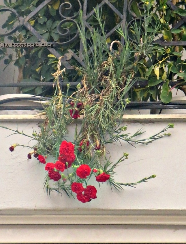 Carnations on Balcony - Flowers for Spring in Greece Int'l bloggers club challenge www.theboondocksblog.com