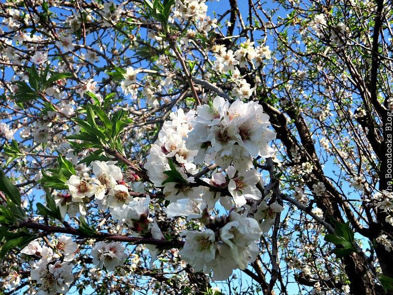 An Almond wreath for Spring, Hometalk's DIY My Spring - www.theboondocksblog.com
