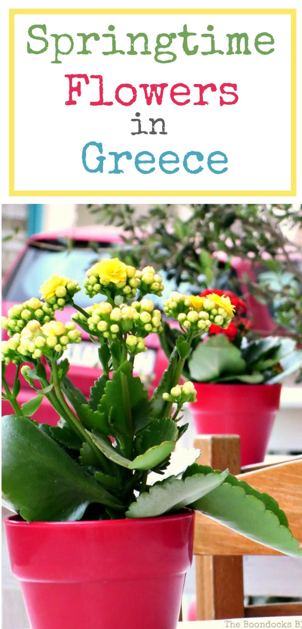 A photo essay of springtime flowers on the streets and balconies of Greece, #photography #photoessay #Greece #springflowers #Springtime #gardening #springcolors Flowers for Spring in Greece Int'l bloggers club challenge www.theboondocksblog.com