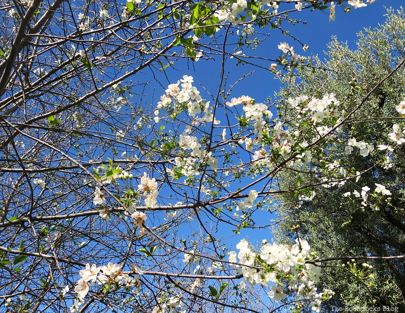 The sour cherry tree, Celebrating May Day www.theboondocksblog.com