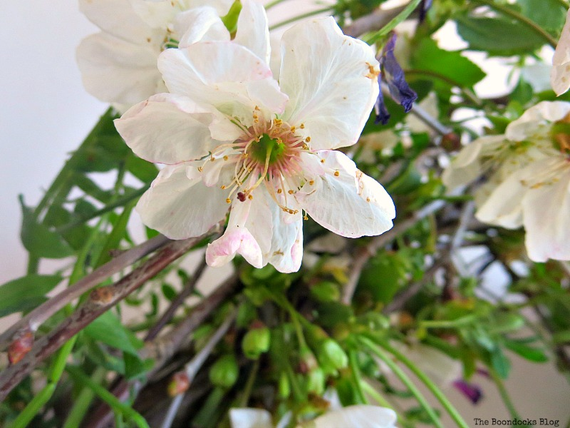 A May Day Wreath sour cherry flower, Celebrating May Day www.theboondocksblog.com