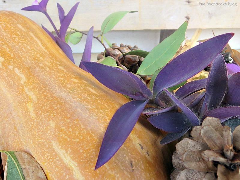 Close-up of purple heart wandering jew plants, Easy DIY Fall Eucalyptus Vignette www.theboondocksblog.com