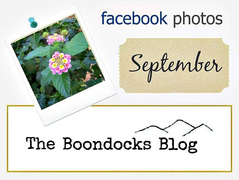 Facebooks photos for September the boondocksblog.com