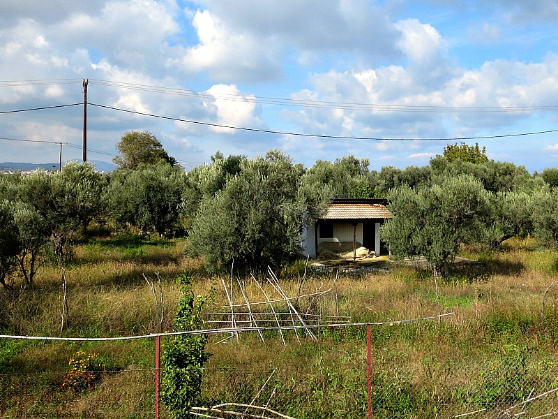 Olive groves, The View from the Railroad Overpass www.theboondocksblog.com