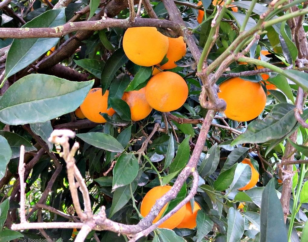 Oranges in full color, Facebook Photos for November www.theboondocksblog.com