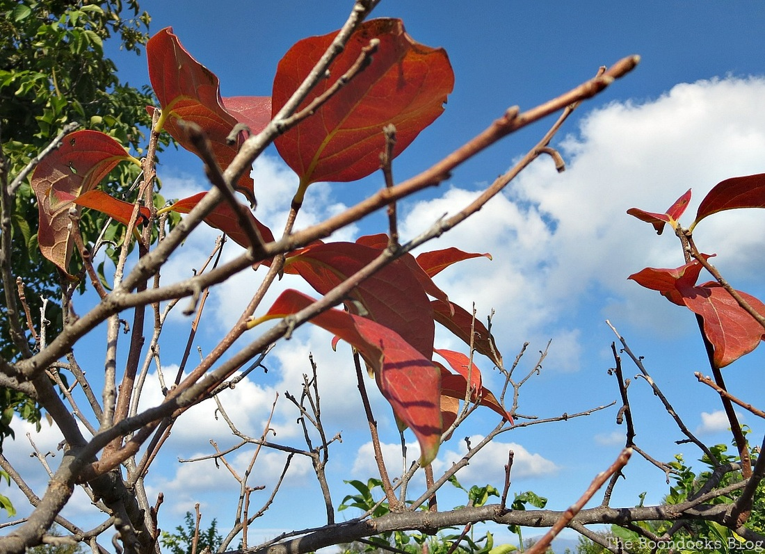 Red leaves hanging on, A tumultuous sunrise, Facebook Photos for Novemb