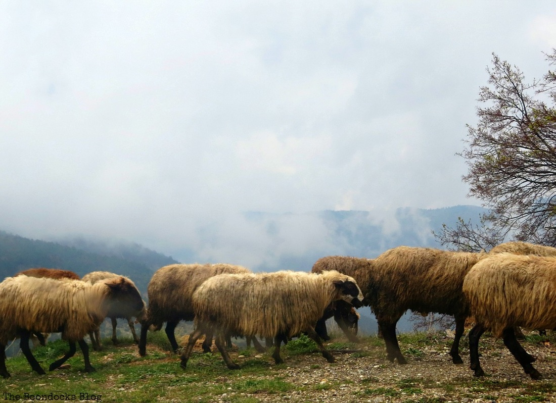 The sheep are wearing their coats, A tumultuous sunrise, Facebook Photos for Novemb
