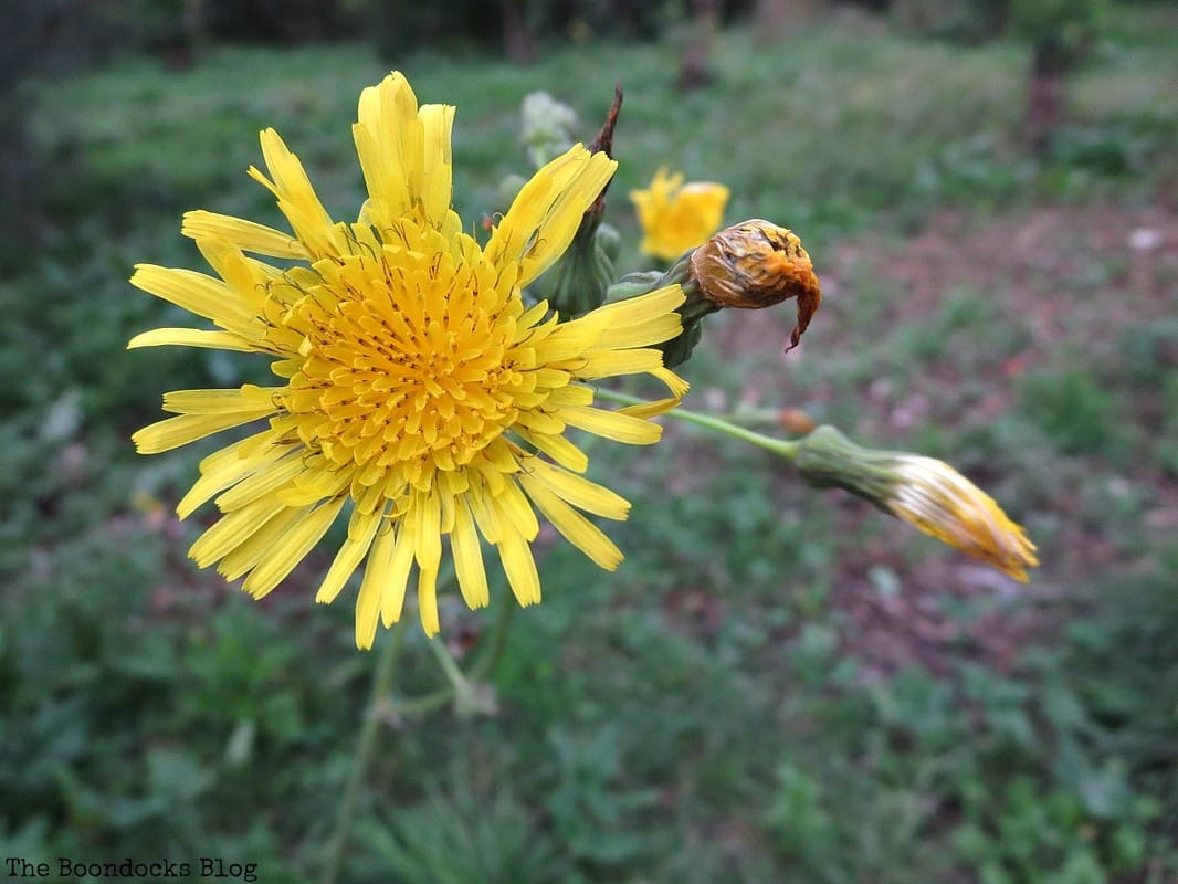 flower, Facebook Photos for December www.theboondocksblog.com