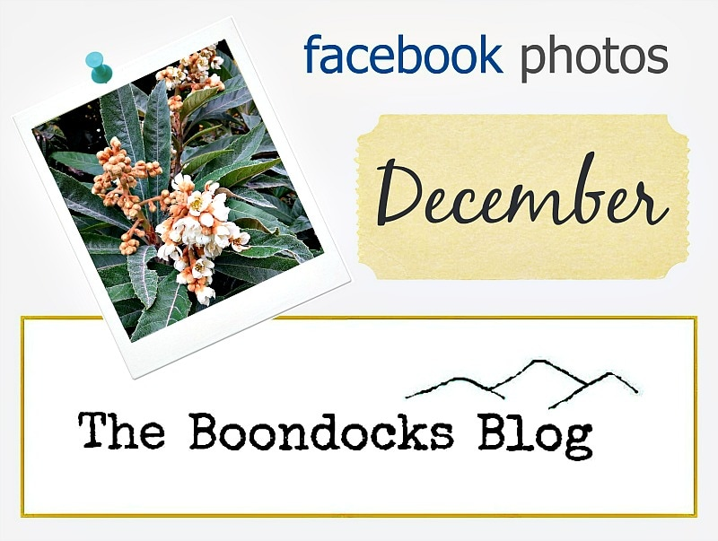 Logo Facebook Photos for December www.theboondocksblog.com