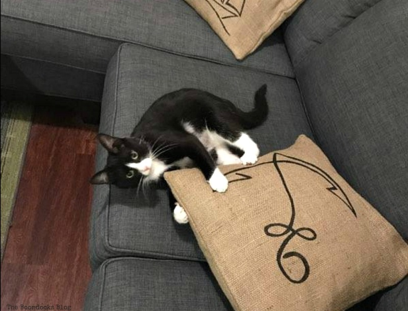 The cat approves of the pillows,  Handmade Pillow Cases with Personality by Make Lemonade Shop www.theboondocksblog.com