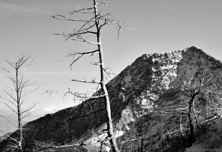 bare trees burned in a fire, Snowy Mountains of Greece, www.theboondocksblog.com