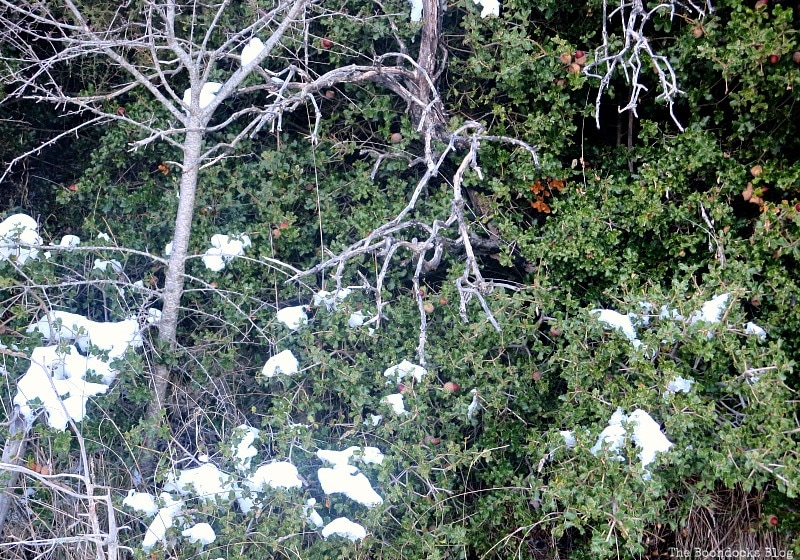 greenery with patches of snow, Snowy Mountains of Greece, www.theboondocksblog.com