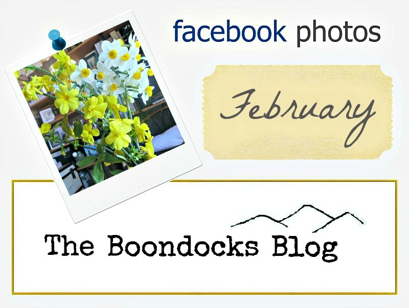 Facebook photos logs the boondocksblog.com