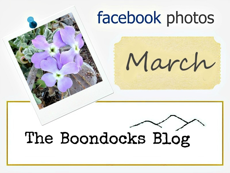 Facebook photo of the day series logo www.theboondocksblog.com
