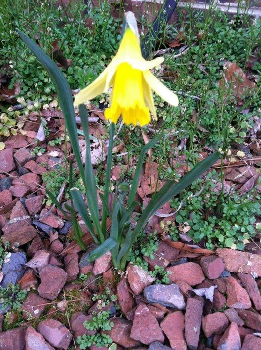 flower, Eight Ideas for the Love of Celebrating Spring www.theboondocksblog.com