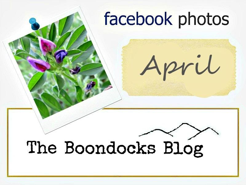 logo, Facebook photos for April, www.theboondocksblog.com