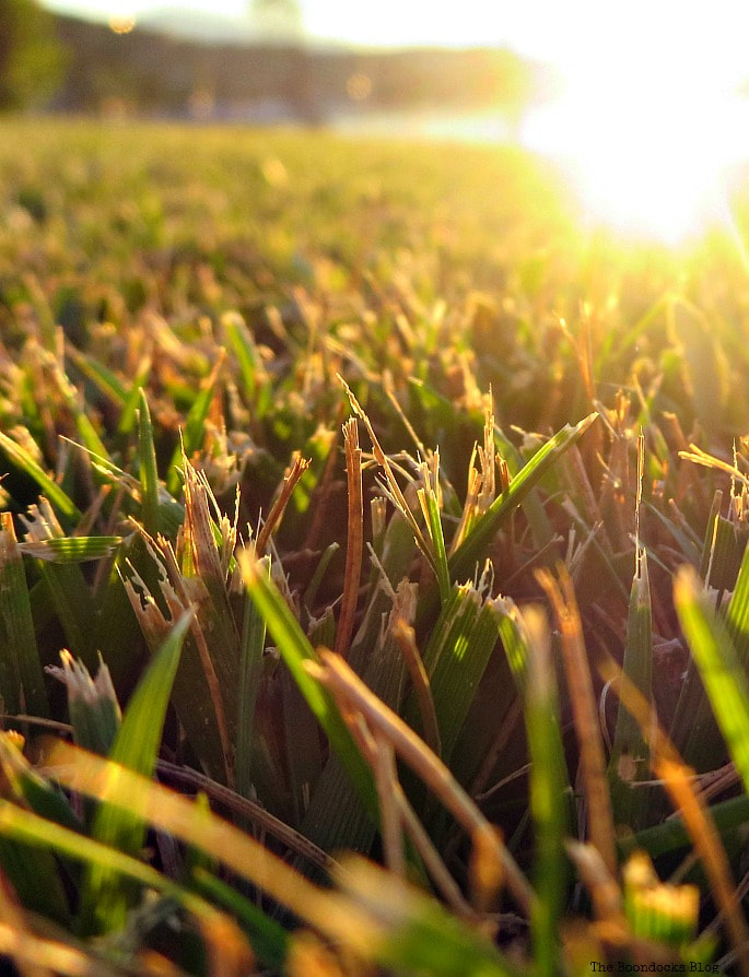 sun hitting the grass, Photo of the Day July 2017 www.theboondocksblog.com
