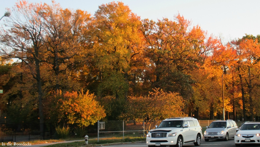 orange trees in the park, My Obligatory Post in Praise of Autumn www.theboondocksblog.com