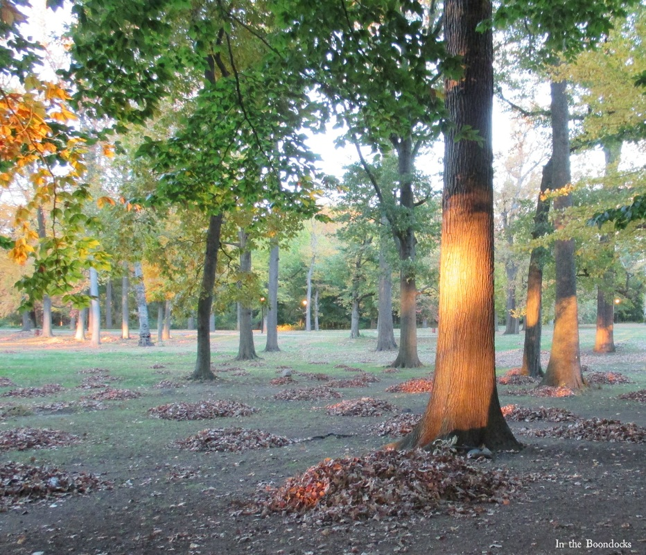 a ray of sunshine in the park, My Obligatory Post in Praise of Autumn www.theboondocksblog.com