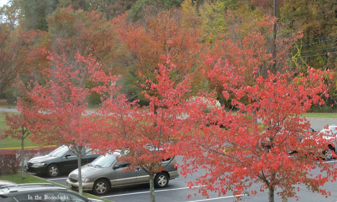 red trees, My Obligatory Post in Praise of Autumn www.theboondocksblog.com