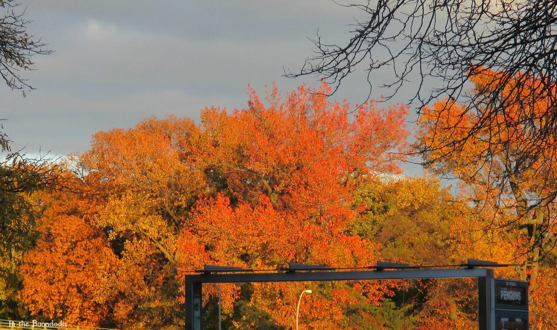 Orange trees, My Obligatory Post in Praise of Autumn www.theboondocksblog.com