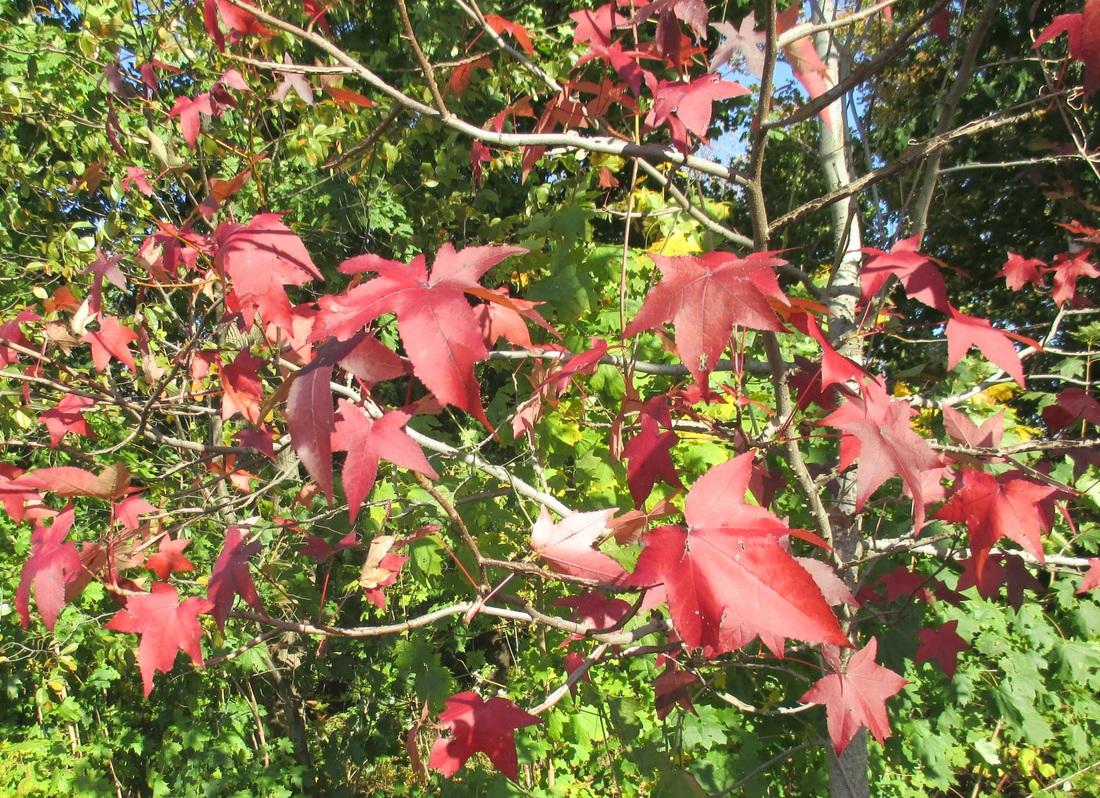 red leaves, My Obligatory Post in Praise of Autumn www.theboondocksblog.com