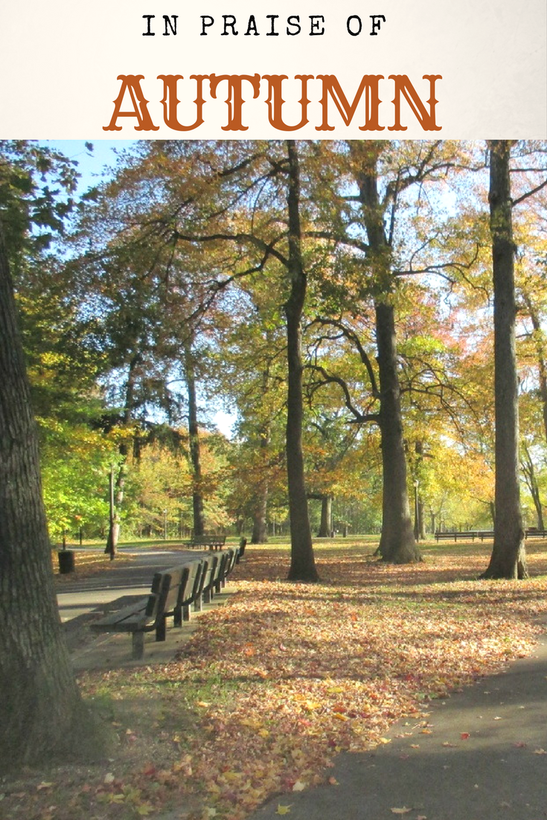 A photo essay in praise of Autumn and the rustic leaves and beauty it displays for us. Photography in New York, #photography #photoessay #NewYorkPhotos #Autumnlove #fallphotos #NewYorkPark #PelhamBayPark #Autumncolors #fallleaves My Obligatory Post in Praise of Autumn www.theboondocksblog.com