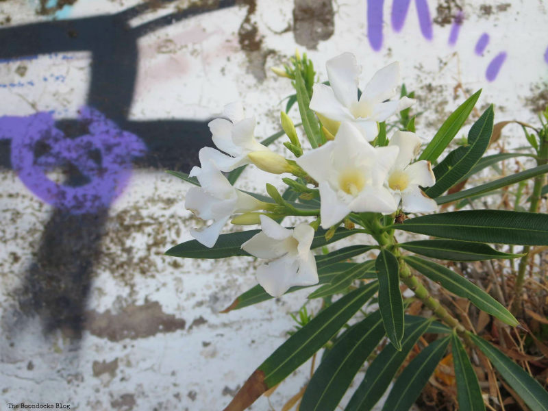 flowers in front of graffiti, Photos of the Day for September 2017 www.theboondocksblog.com