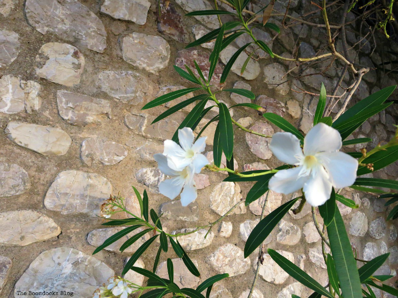 flower in front of stone wall, Photos of the Day for September 2017 www.theboondocksblog.com