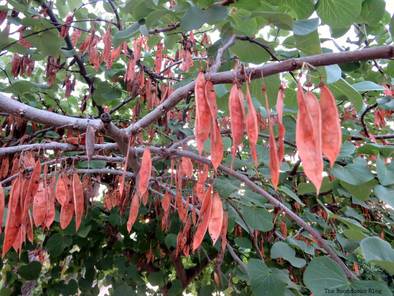 red leaves on a tree, Photos of the Day for September 2017 www.theboondocksblog.com