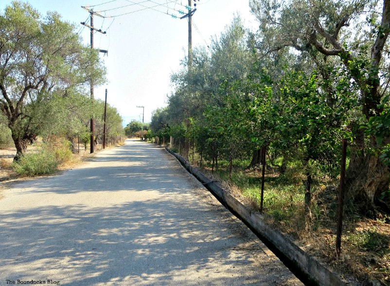 road with olive and lemon trees, Photos of the Day for September 2017 www.theboondocksblog.com