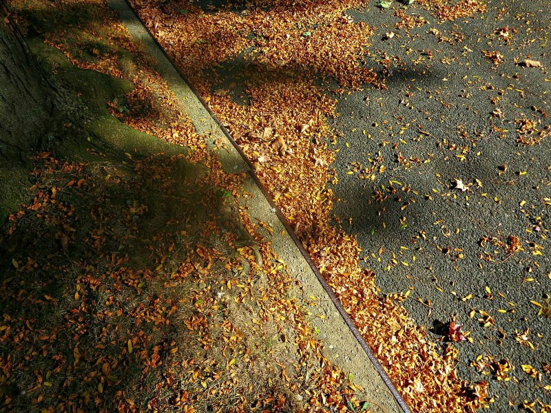 leaves scattered on the ground, Photo of the Day for October 2017 www.theboondocksblog.com