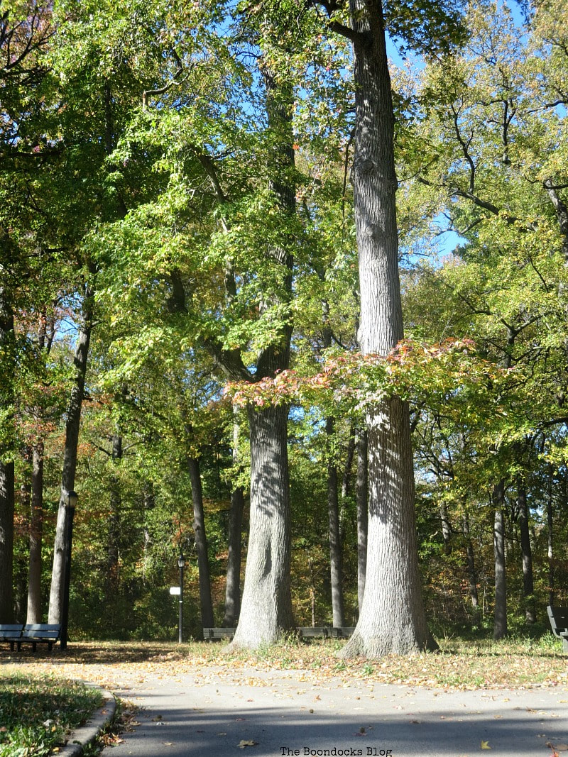 Tall fall trees at New York Park, Photo of the Day for October 2017 www.theboondocksblog.com