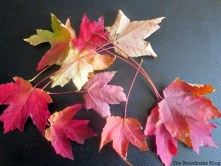 Various Fall leaves, How to Easily add Fall in your home www.theboondocksblog.com