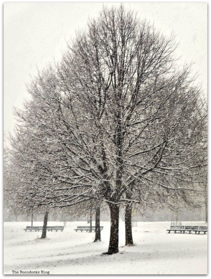 snowy scene in the park. Happy New Year to All! www.theboondocksblog.com