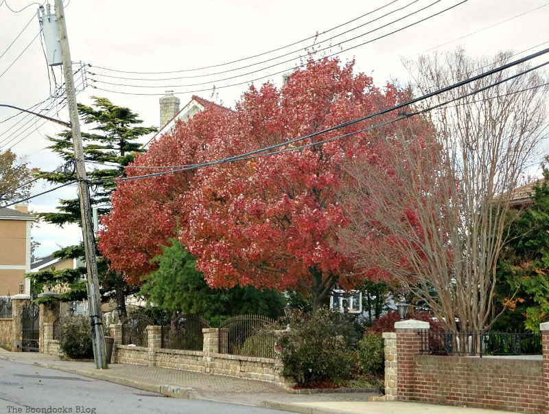 Tree with fall colors, Photos of the Day for November and December www.theboondocksblog.com