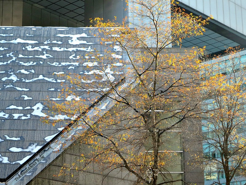 fall tree in front of concrete building with snow, Photos of the Day for November and December www.theboondocksblog.com