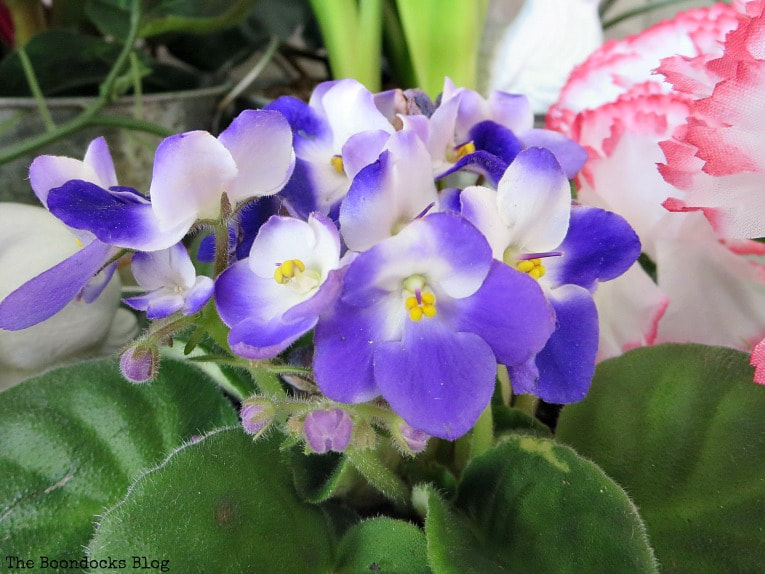 Viola plant, How to Fake A Green Thumb with this Planter Box Idea, www.theboondocksblog.com