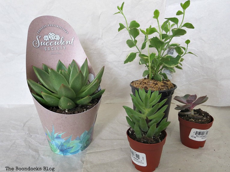 Succulents and a vine, How to Re-Purpose Household Items as Planters, theboondocksblog